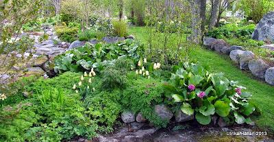 Trädgård,Perenner