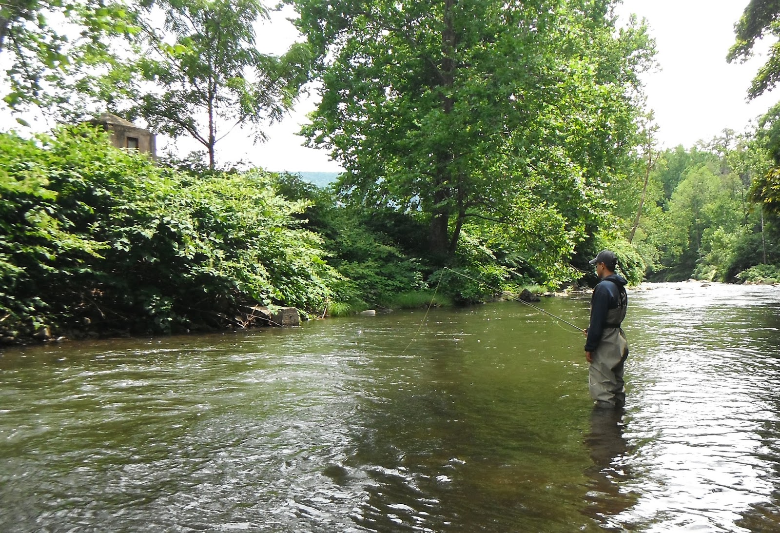 Western maryland fly fishing the savage river wins again for Trout fishing maryland
