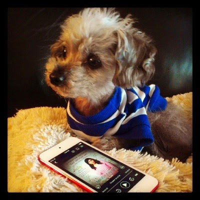 Murchie lays on a fuzzy, off-white pillow, still wearing his t-shirt. His head is raised and his ears are perked as he looks at something off screen. In front of him lays a red-bordered iPod with the cover of Is Everyone Hanging Out Without Me? on its screen. It features a picture of Mindy Kaling dressed in pink.