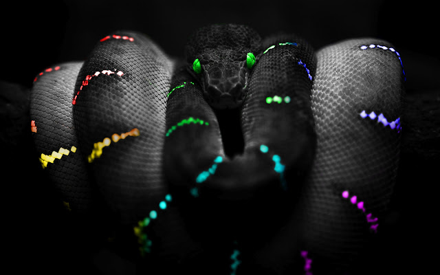 Snake Selective Color Photography HD Wallpaper