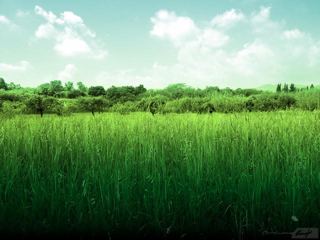 paisaje-avena-el-campo-verde-azul-cielo