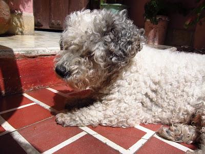 Santiago de Cuba dog resting in courtyard