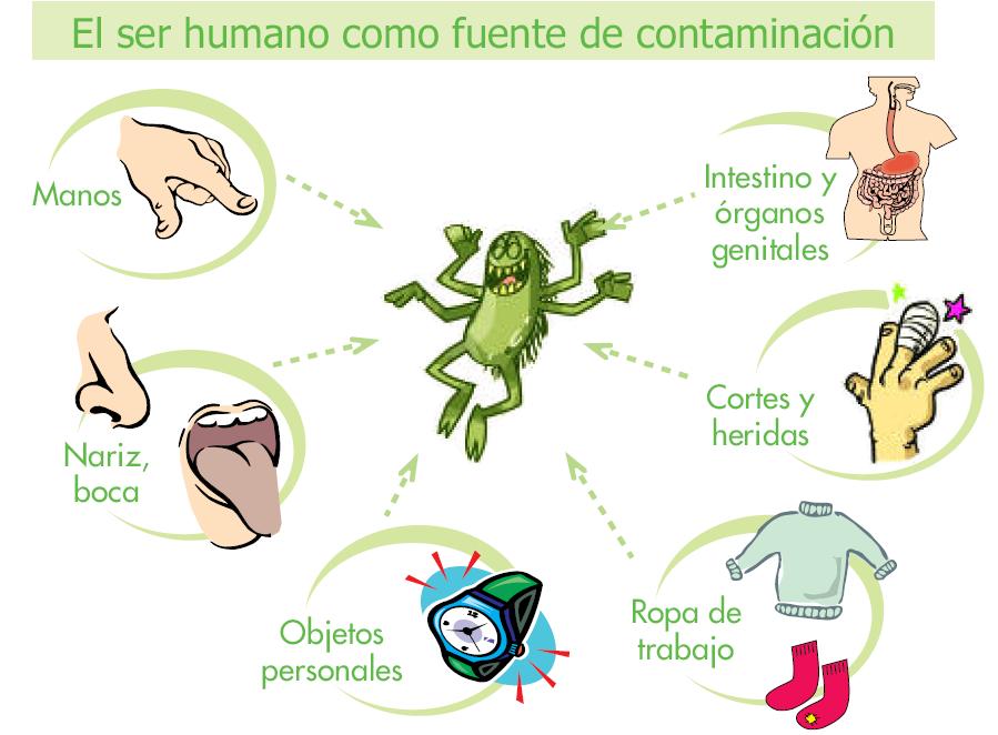 Frutilandia la fruta en todas sus formas normas de higiene personal - Fuentes de contaminacion de los alimentos ...