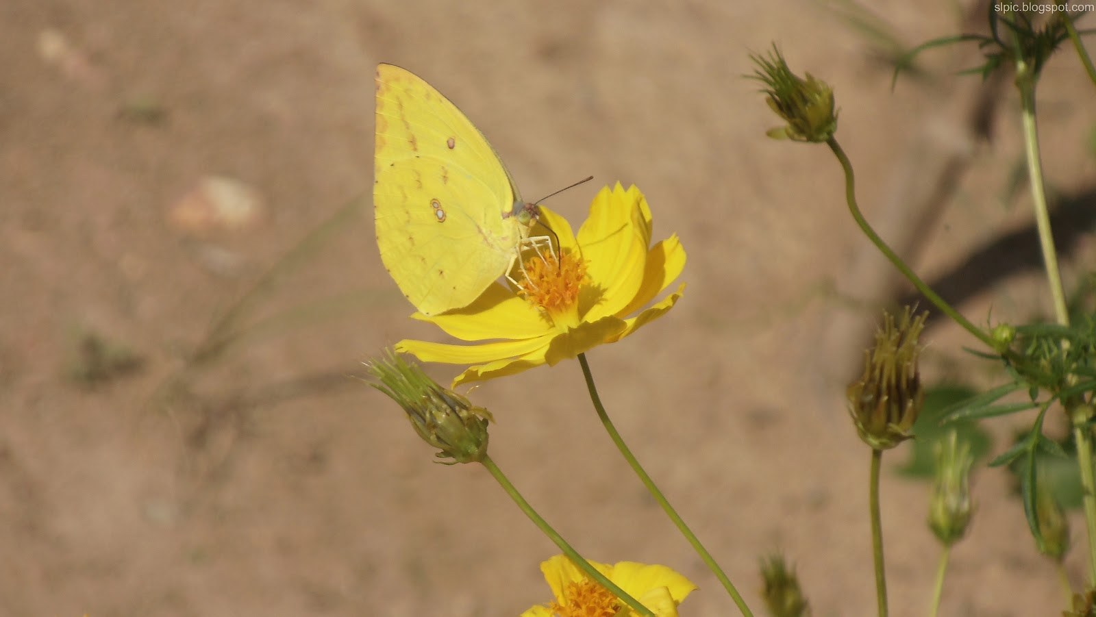 http://1.bp.blogspot.com/-72owAxu5GQE/UBImyljDXdI/AAAAAAAAKkY/ohfdv1OA2AU/s1600/Srilanka+Various+Flowers+And+Nature++(14).JPG