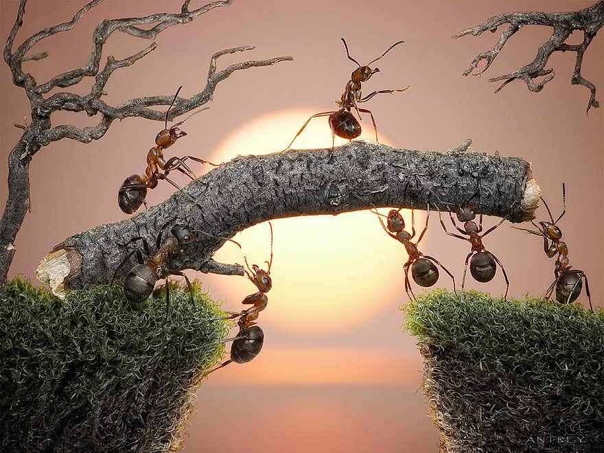 18-The-Bridge-Andrey-Pavlov-Photographs-of-Ants-an-Affordable-Journey-to-a-Parallel-World