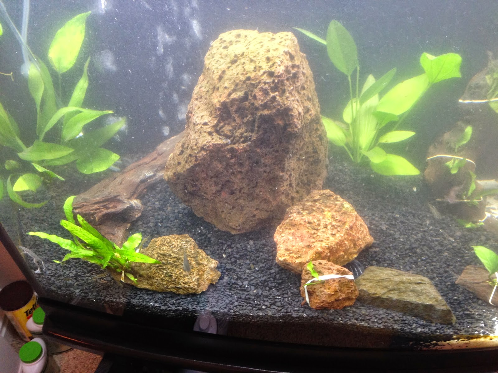 Loach Eel Cave tube