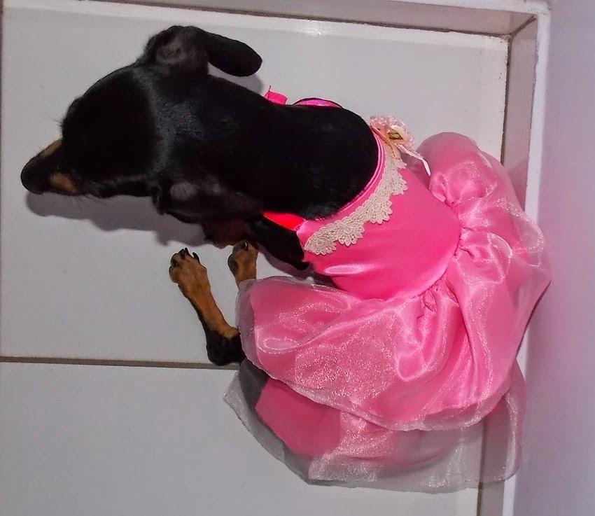 http://www.petencanto.com/pd-116f8a-vestido-princesa-rosa.html?ct=&p=1&s=1