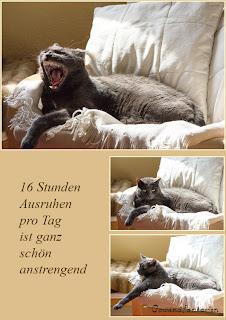 Katzen schlafen 16 Stunden