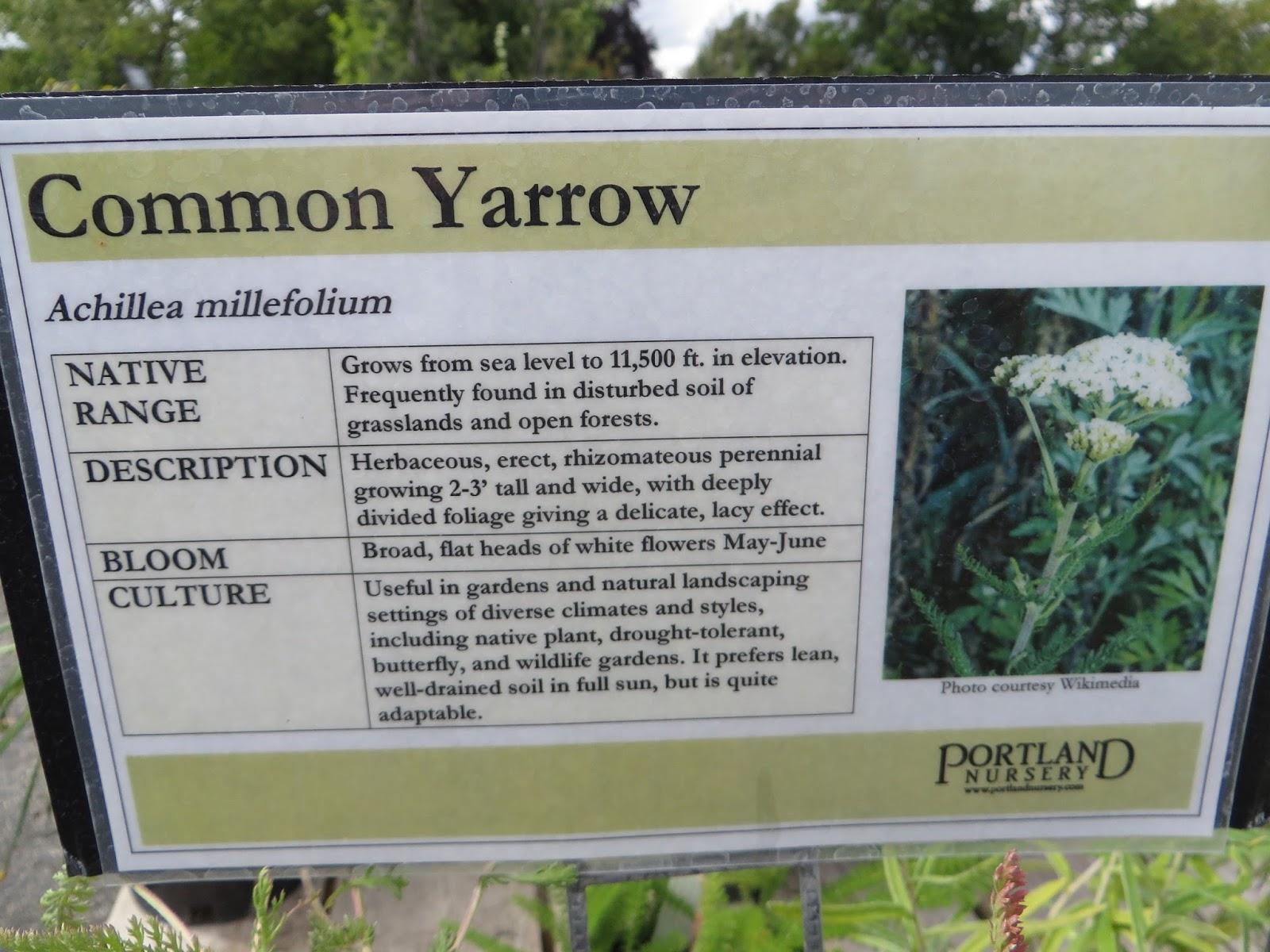 Chickadee Gardens Portland Nursery Visit The Natives – Garden Plant Signs