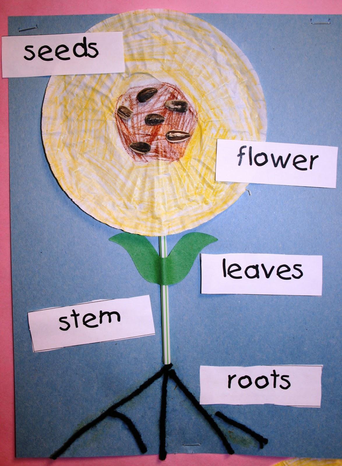 Eberhart's Explorers: Plant Week!
