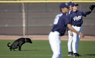 funny picture dog is pissing on the field during baseball game