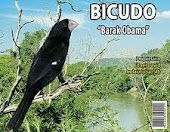 Pico Plata Negro