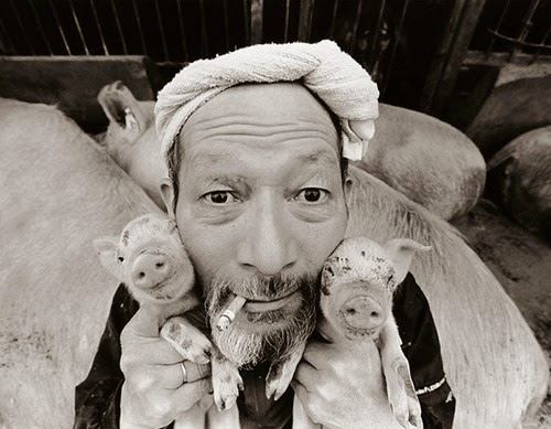 14 Foto Potret Kehidupan Penternak Babi di Jepun