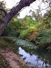 San Antonio River looks primeval