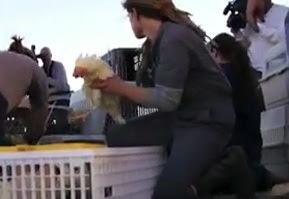 EUA: Maior resgate de animais da história da Califórnia