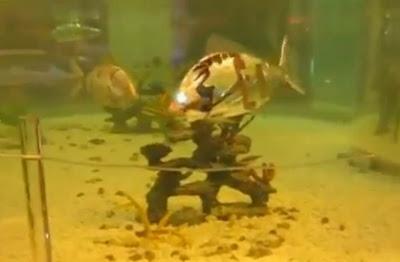 peces robot con luz en los ojos