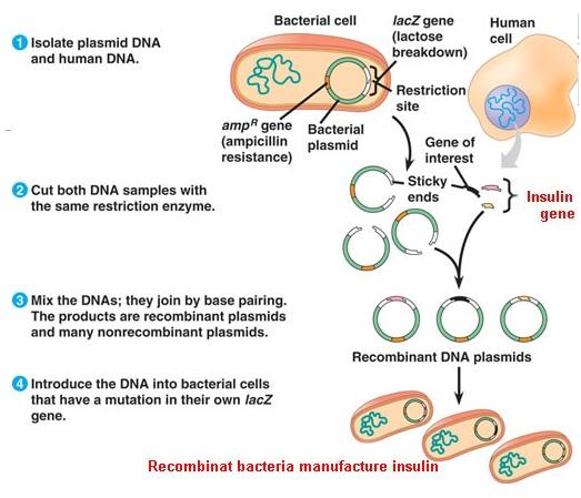 ecotoxicologia-bioensayos: PREGUNTAS BIOLOGIA MOLECULAR