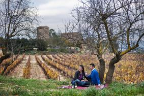 Pasea por los viñedos y descubre todos los secretos del cultivo de la viña