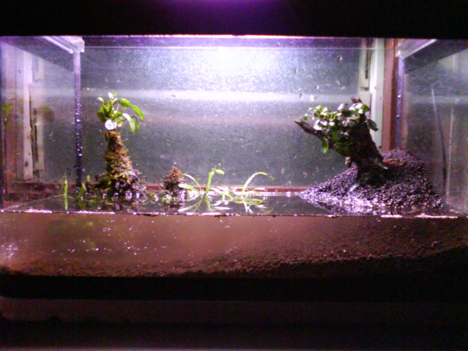 Aquabie new planted tank setup mann for Cloudy water in new fish tank
