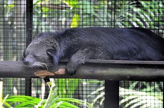 Funny Bearcat