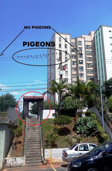 Pigeons+know+their+targets