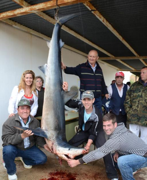 Mondo pesca news spagna squalo verdesca di 150 chili - Enorme terras ...