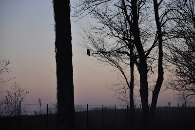Silhouette of an owl in a distant tree