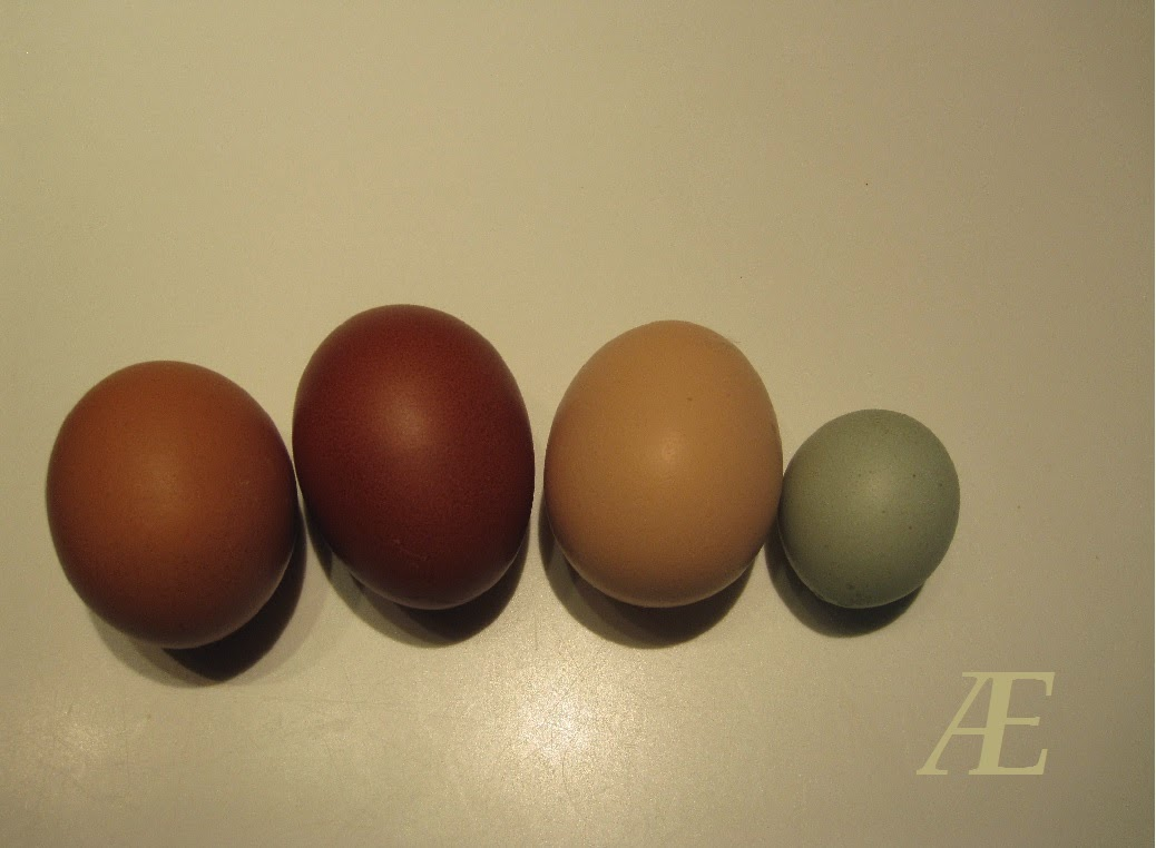 Grønlægger, grünleger, æg, flotte grønne, mini