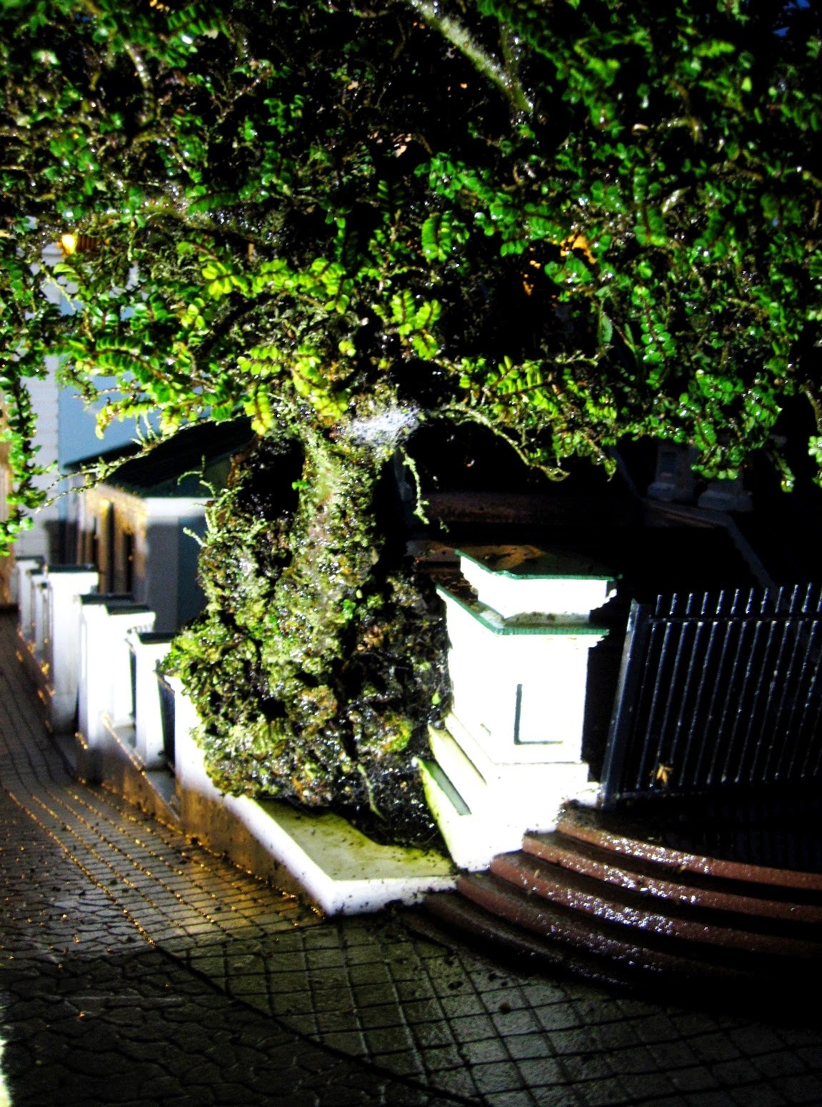 Miniature model street scene of a tree and a concrete wall on a hill in the rain.
