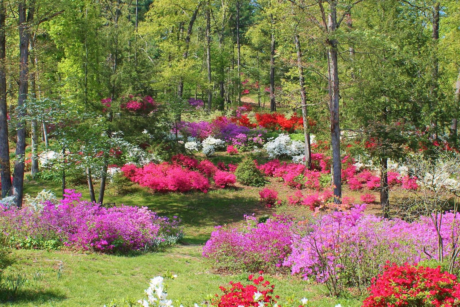 Adventures Among Us Pinecrest Azalea Gardens Oak Ridge Mo