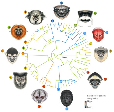 Faces of male primates from Central and South America Credit: Stephen Nash