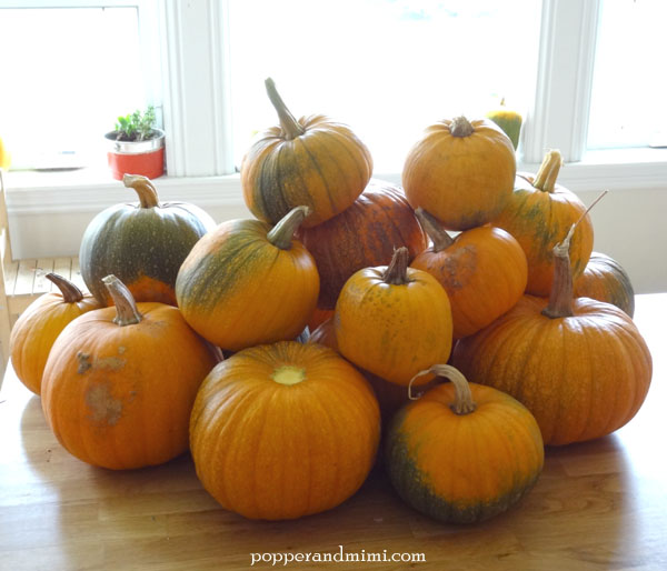 How to make pumpkin puree from homegrown sugar pumpkins