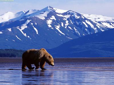 ولاية الاسكا