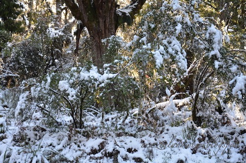 Snow in forest