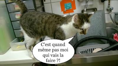 Une chatte qui doit faire la vaisselle ?
