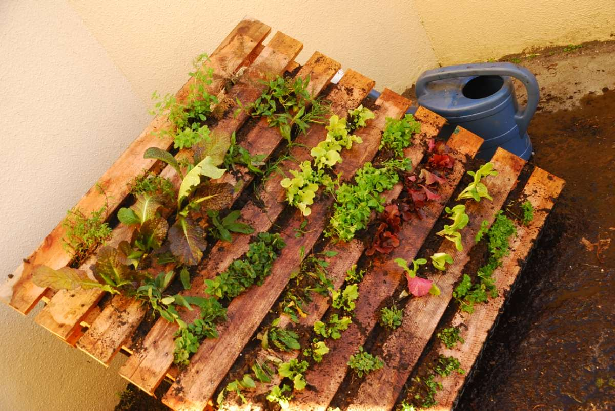 The Vertical Vegetable Garden Ziets Ramblings