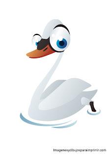 cisne con grandes ojos divertido