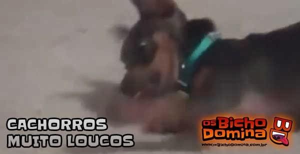 Cachorros muito loucos!