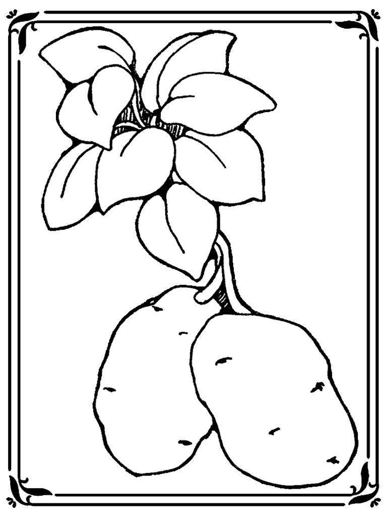 Potato Coloring Pages To Print Realistic Coloring Pages Potato Coloring Page