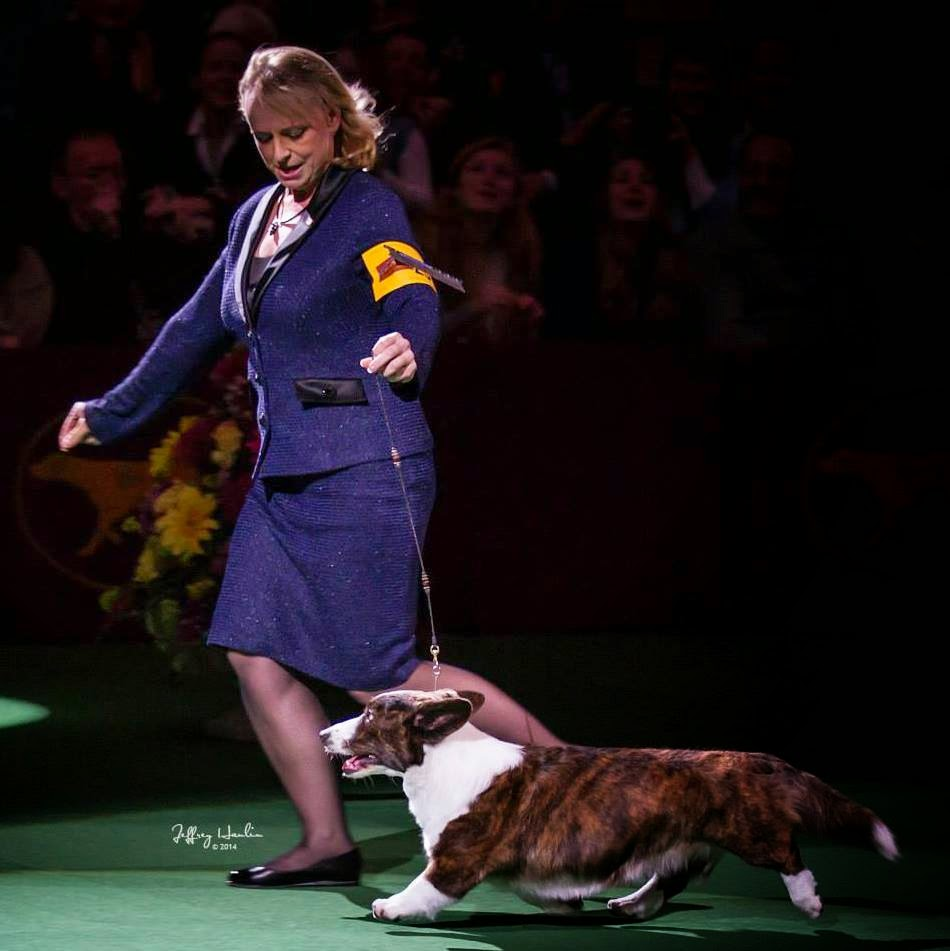 Show Dog Handlers In Tx