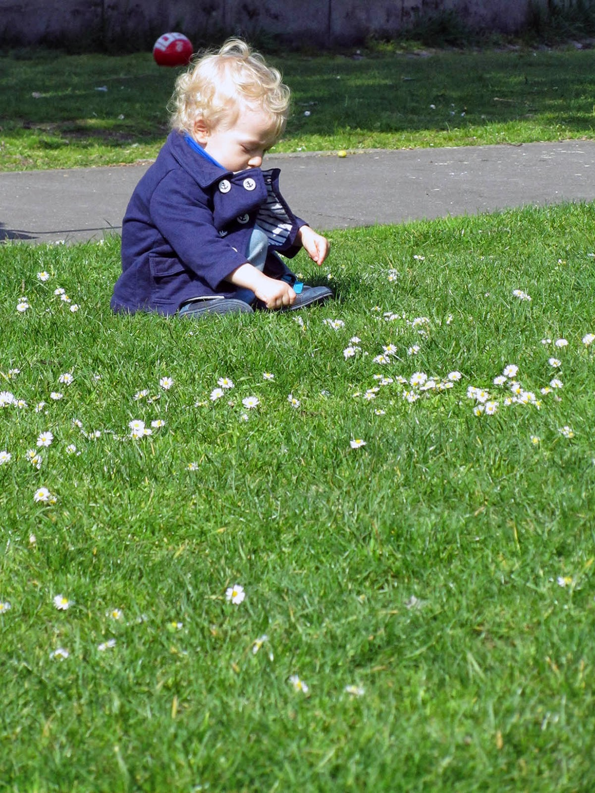 little boy picking daisies
