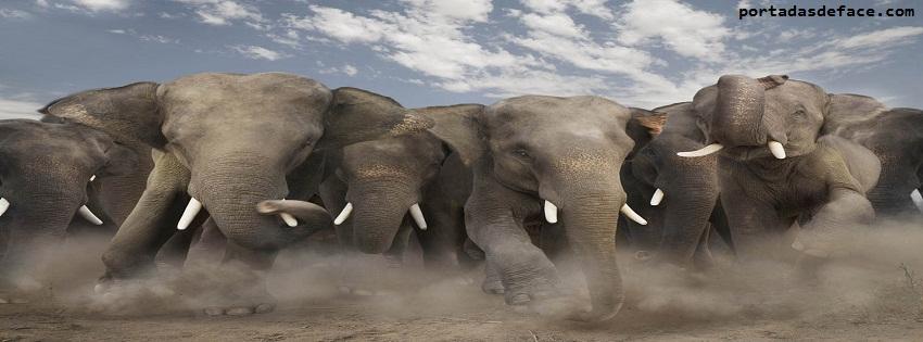 Portada Para Timeline Facebook Elefantes
