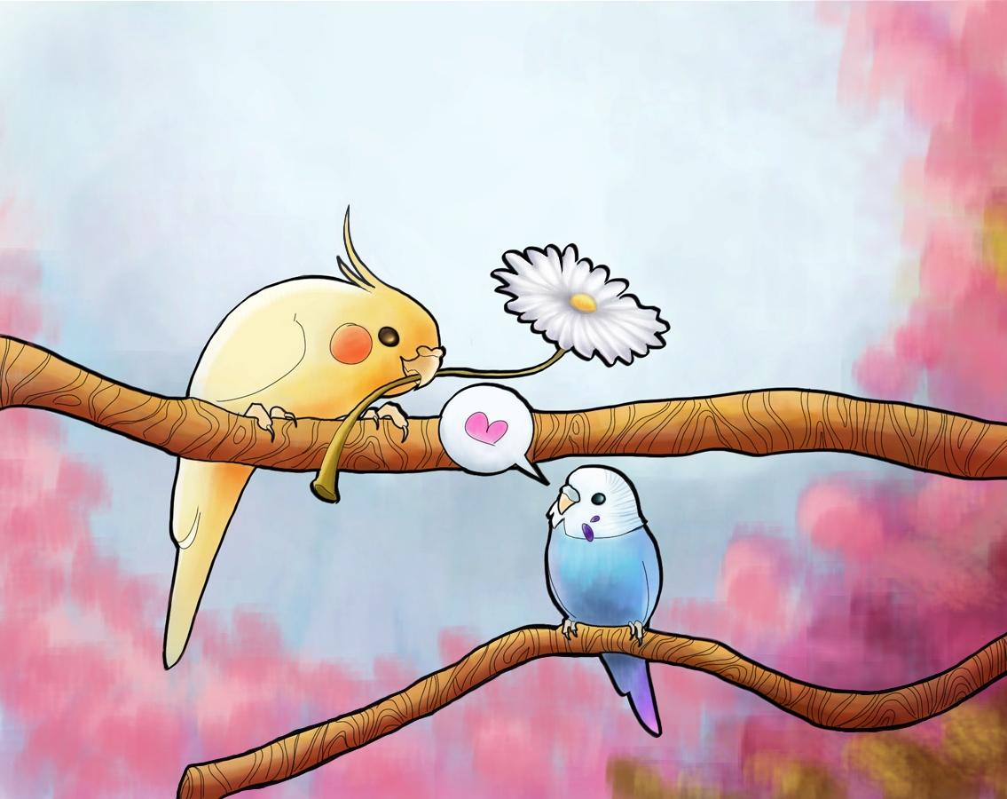 Gallery For gt Cute Cockatiel Drawing