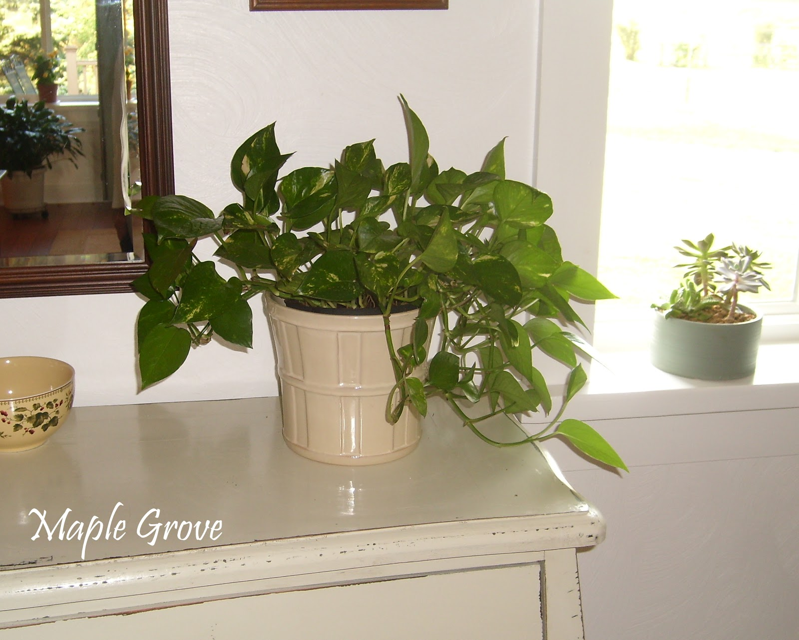 Vining house plants house plan 2017 for Large non toxic house plants