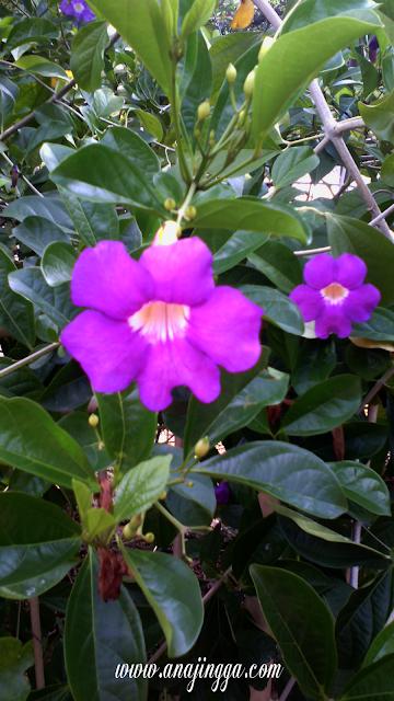 bunga berwarna ungu