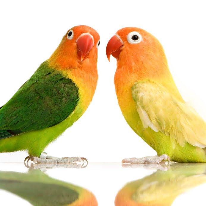 Really. was bird love sex congratulate