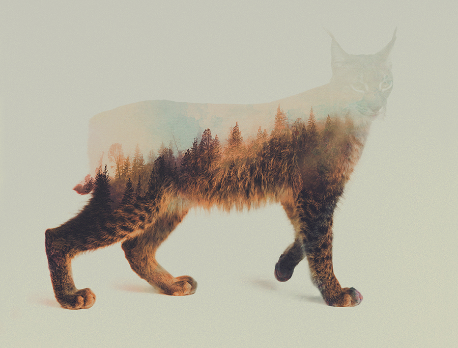 06-Lynx-Andreas-Lie-Animals-in-Photographic-Double-Exposures-www-designstack-co