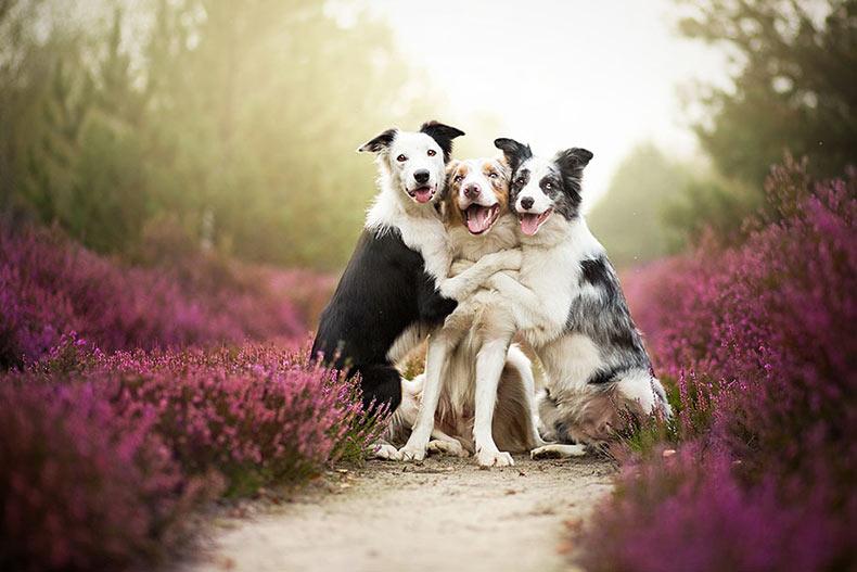 Cálidos e inspiradores retratos de perros de Alicja Zmyslowska
