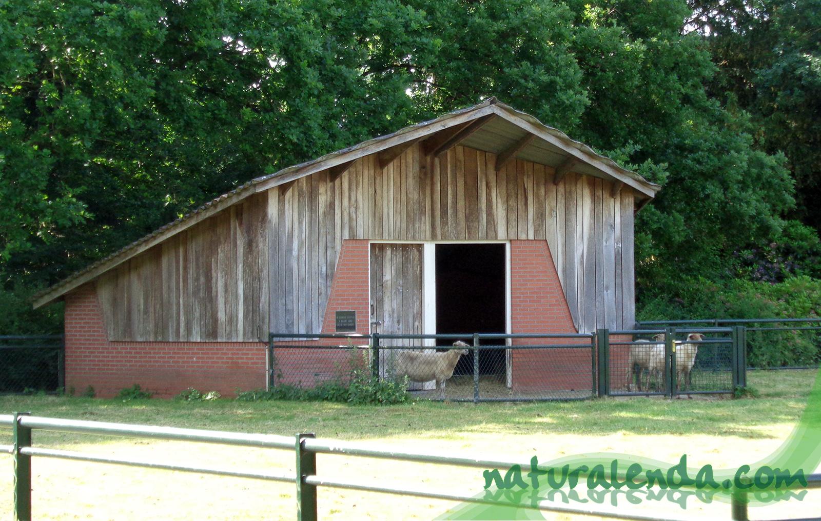 casa de ovejas