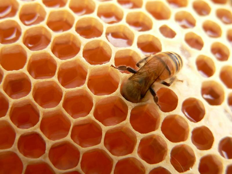Honey (hun' ē), n.